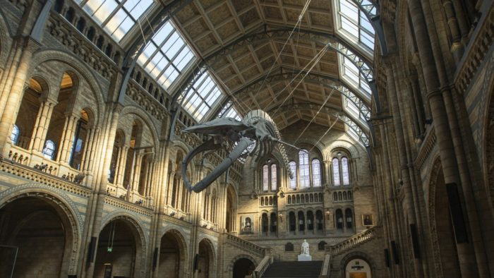 Natural History Museum London Whale